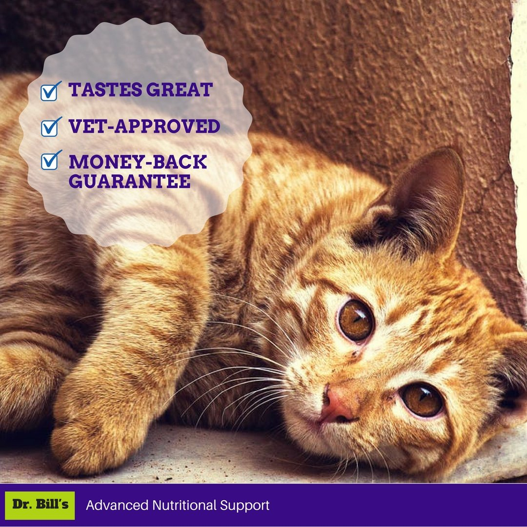 Dr. Bill's Feline Health Defense Pet Supplement - Antioxidant Powder for Cats, with Turmeric, Ashwagandha, and Vitamin C