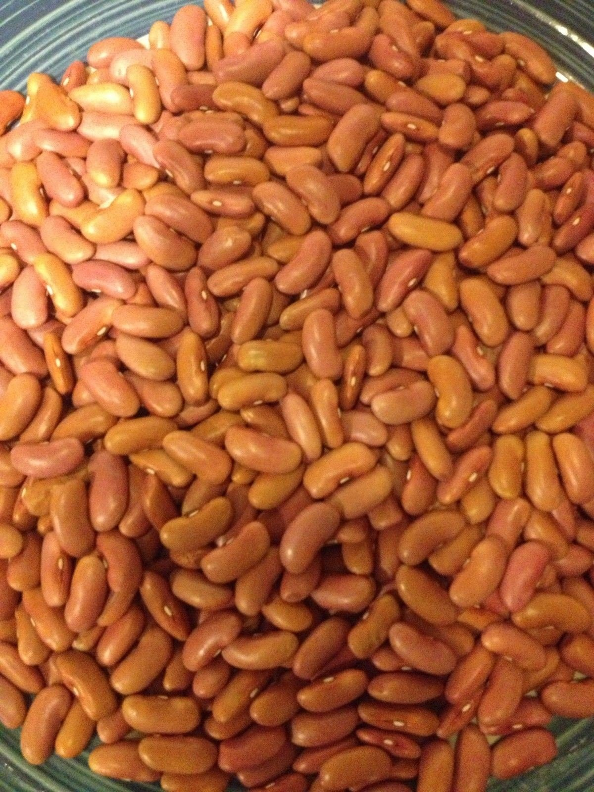 Kidney Bean,Large light Red (1/4 lb Seeds) Non-GMO Heirloom Grown Organically