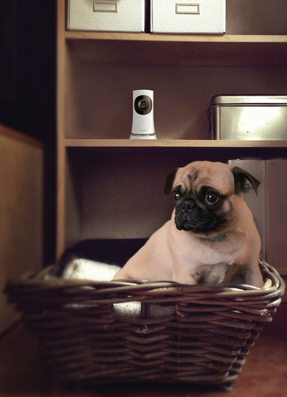 Philips M120E/10 - Cámara de vigilancia inalámbrica (WiFi, visión nocturna HD, estabilizador focus mode), blanco: Amazon.es: Electrónica
