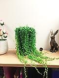 Senecio rowleyanus House Plant in a  10/11cm Pot. String of Pearls