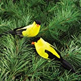 Yellow Finch Clip Ornament, Assorted of 2