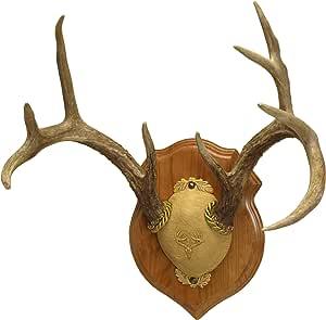 Amazon.com : Walnut Hollow Deluxe Antler Display Kit Oak ...