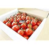 「もはや!フルーツ」完熟どれ 1.8kg×1箱 無選別 高糖度ミニトマト フルーツトマト 宮崎県門川産