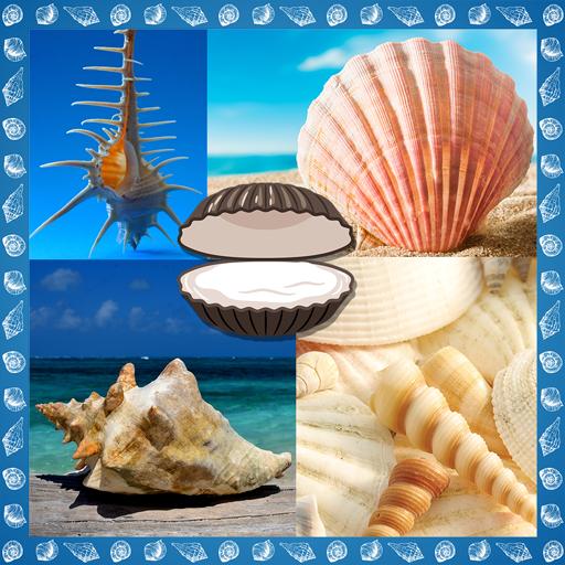 (Seashells Photo Collage)
