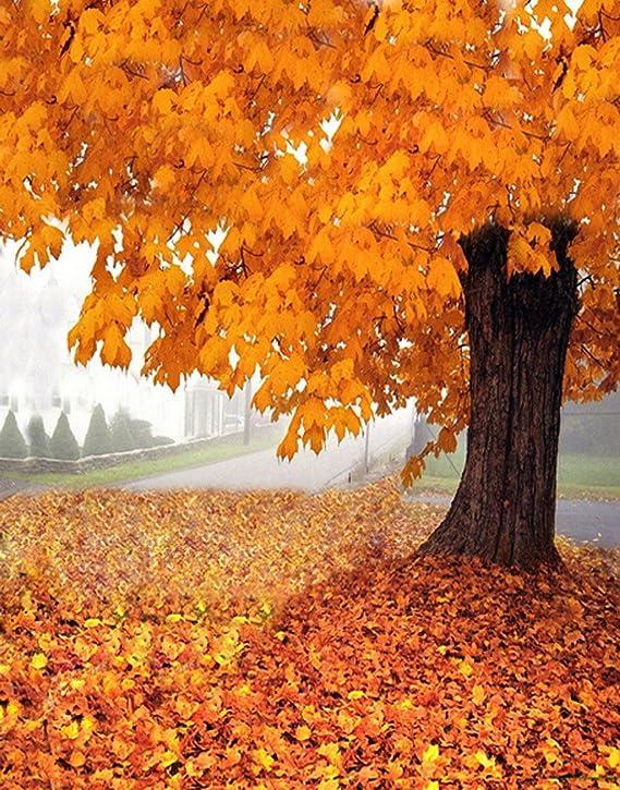 A Monamour Herbst Herbst Saison Landschaft Gelb Orange Kamera