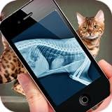 Simulation XRay Cat