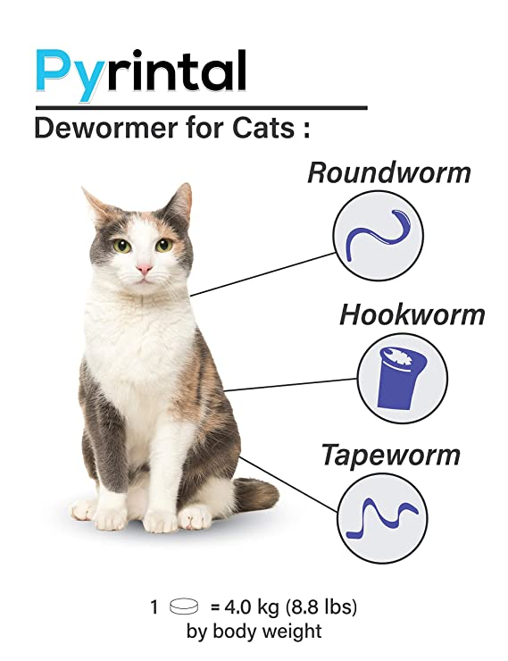 Pictures Of Cat Roundworms