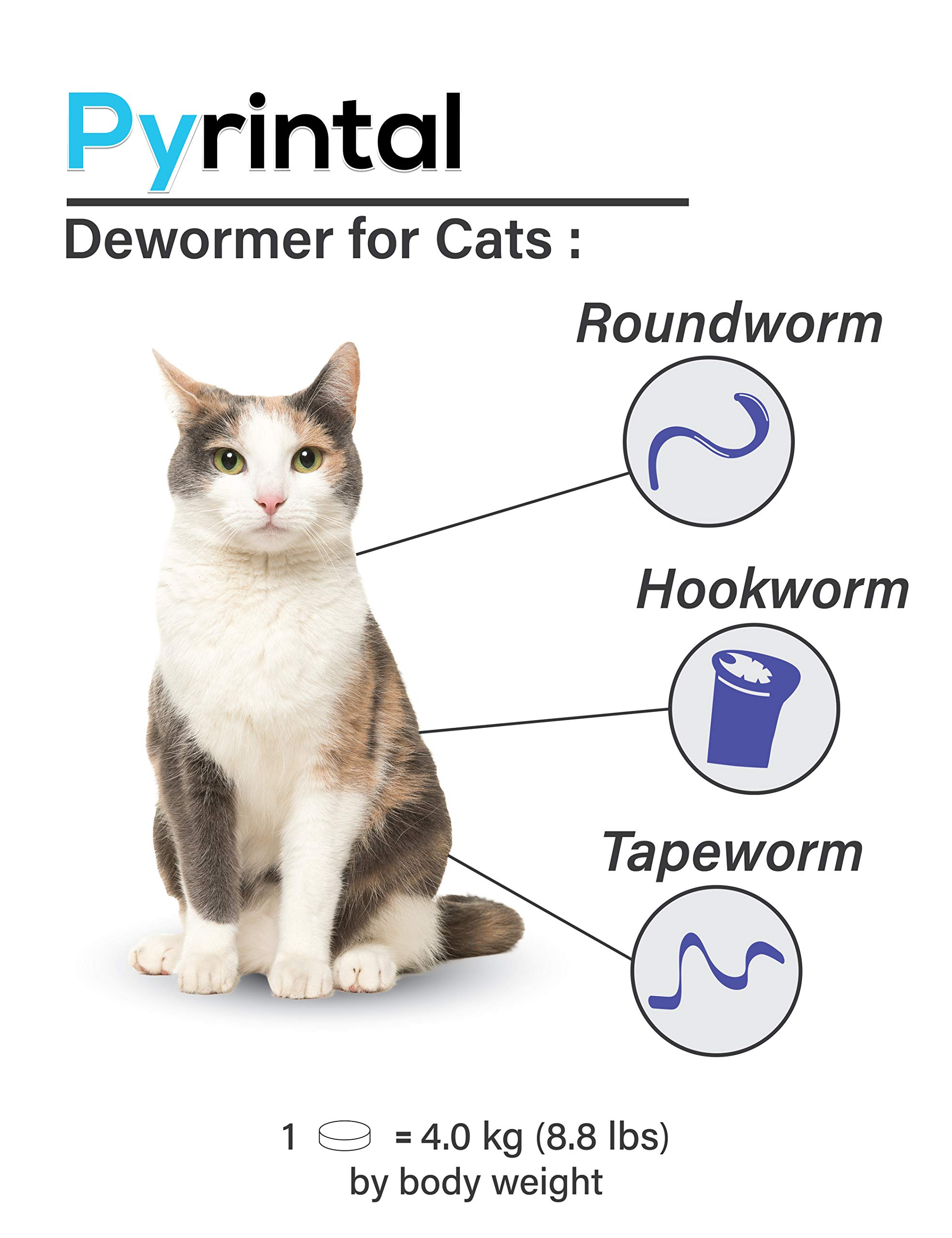 Cat Roundworms Vs Tapeworms