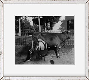 INFINITE PHOTOGRAPHS Photo: Catsup,Man Squirting Milk,Cow,Mouth,cat,Milking,Farm Life,Dairy,c1898