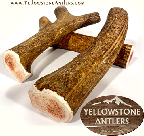 Giant Elk Antler Dog Chews for X-Large Dogs 10-11 inches Over 1 Pound Made from Grade-A USA Elk Antlers