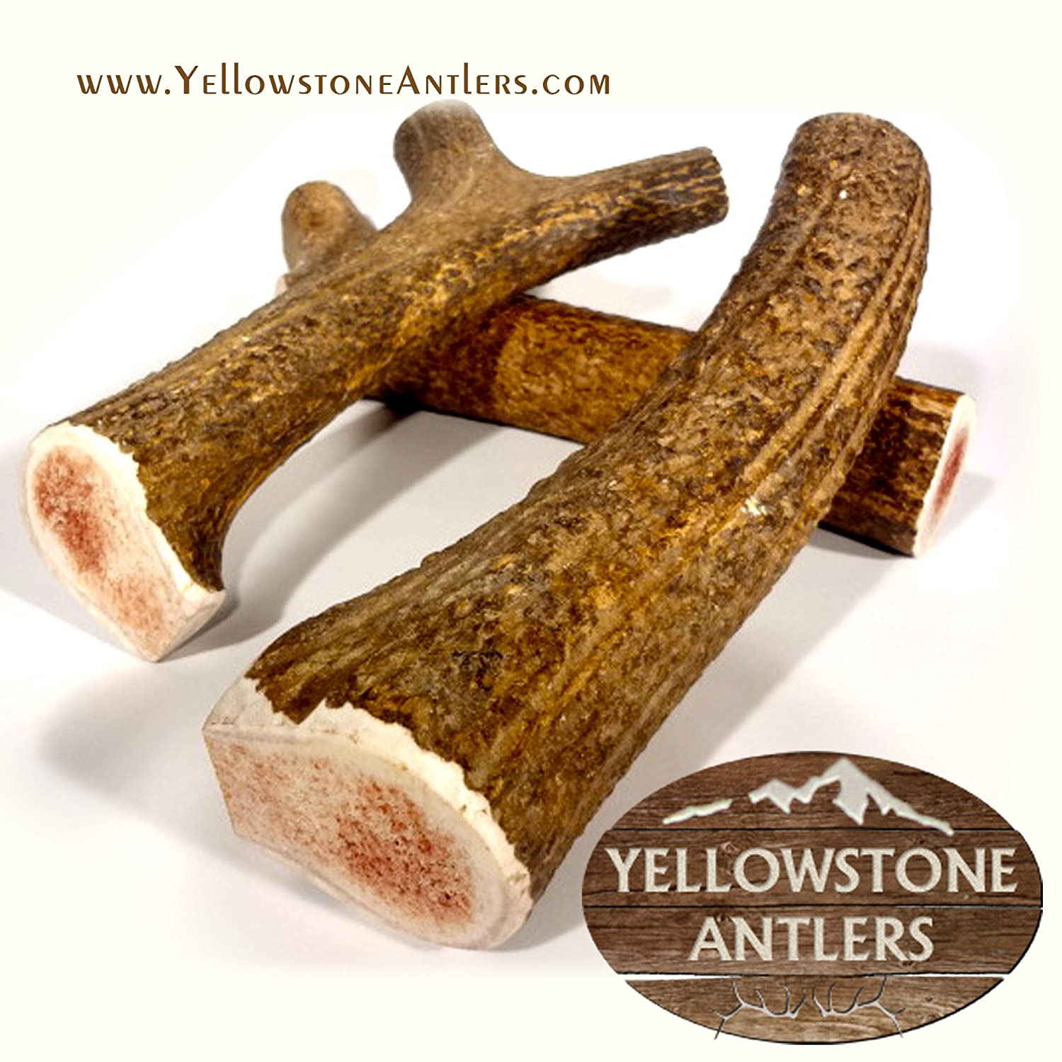 Elk Antler Dog Chews for X-Large Dogs 10-11 inches Over 1 Pound Made from Grade-A USA Elk Antlers