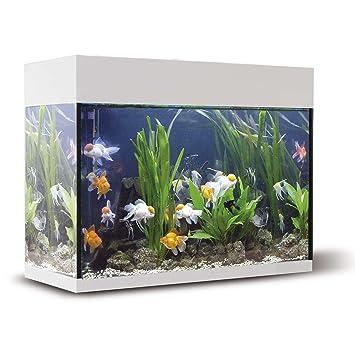 ICA KXI45B Kit Aqualux con Filtro Interior, Crema: Amazon.es ...