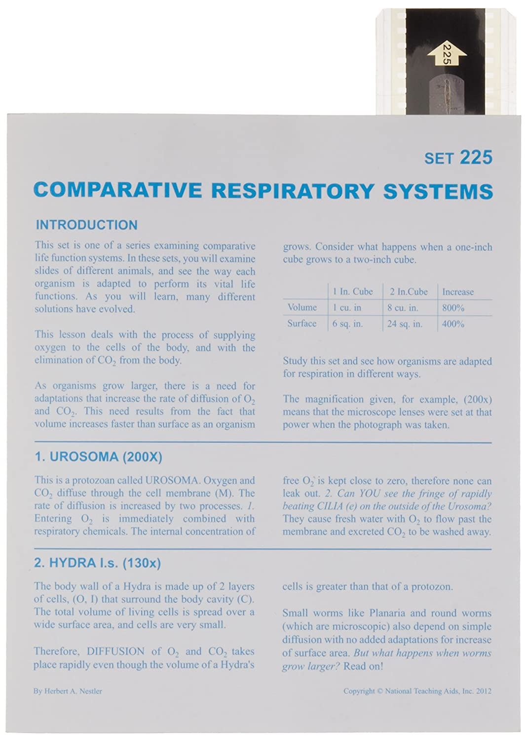 American Educational Microslide Comparative Respiratory System Lesson Plan Set T-225