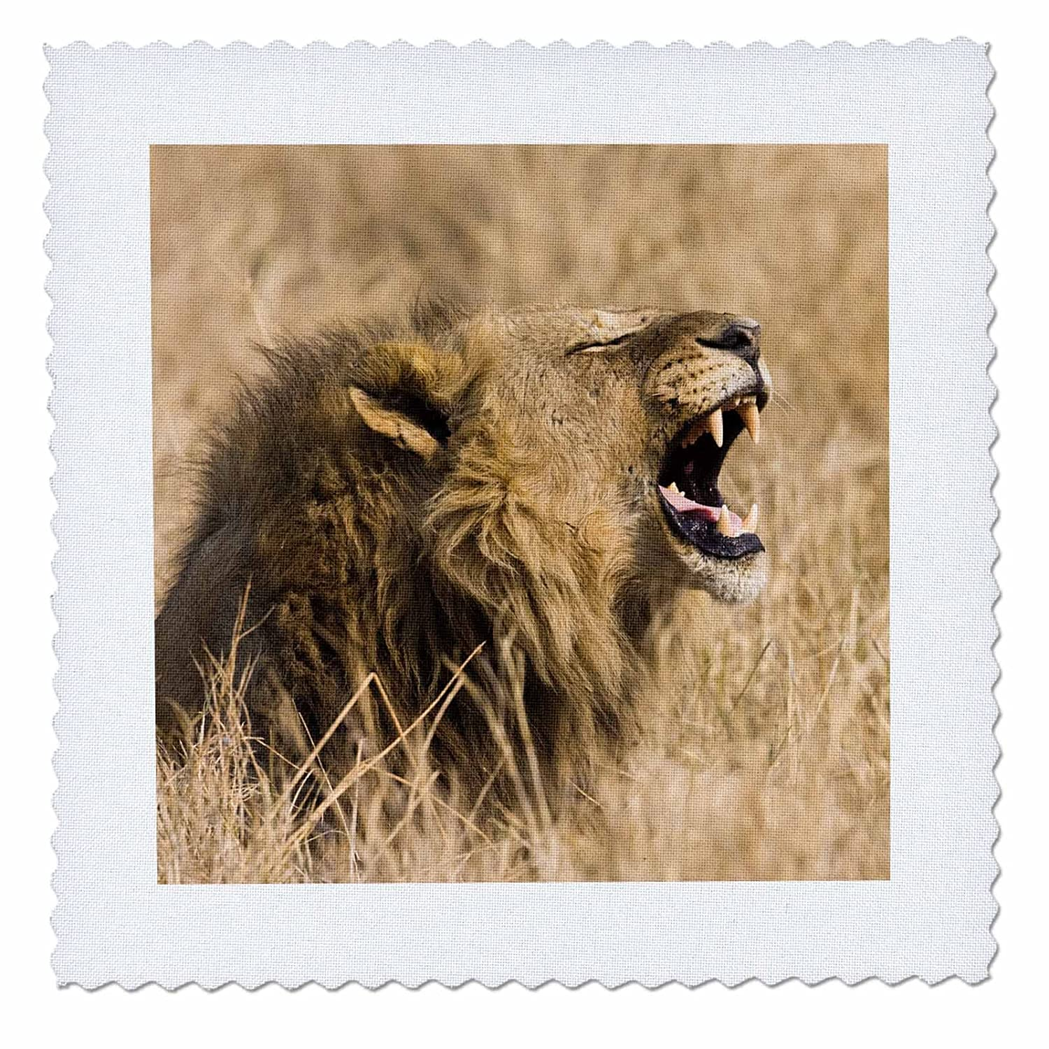 3D Rose Okavango Delta Botswana Close Up of Male Lion Roaring Square 12 by 12 Inch Quilt 12 x 12