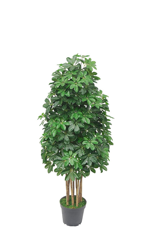 PASAMO 07542 Schefflera 155cm Kü nstliche Pflanze mit Echtholzstamm