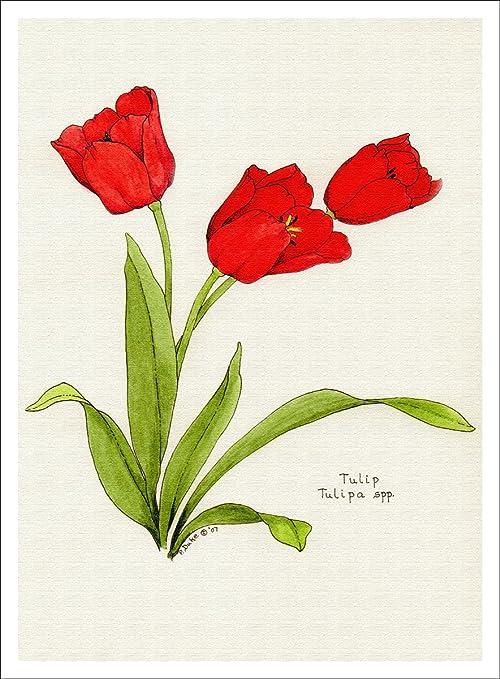 Tulip Print Modern Art Instant Download TULIP LEAVES Botanical Print Black and White Print Instant Download Nature Print Fine Art