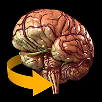 Amazon Brain 3d Atlas Of Anatomy Appstore For Android