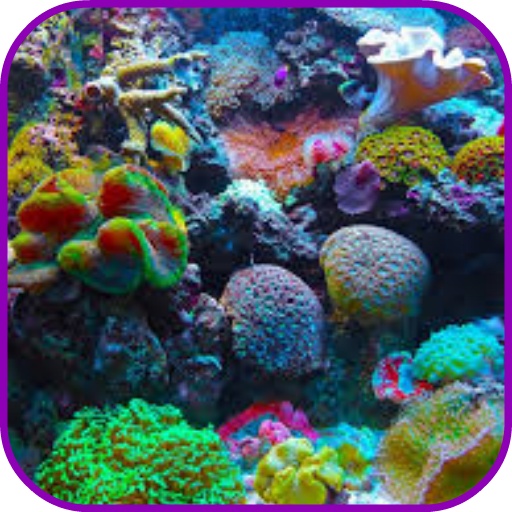 Horn Coral (Coral Reef Wallpaper)