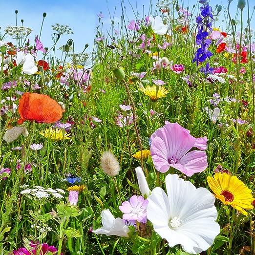 Plantas silvestres anuales y perennes mezclaron semillas: Amazon.es: Jardín