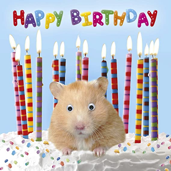 Hamster Birthday Card 3d Goggly Moving Eyes Birthday Surprise