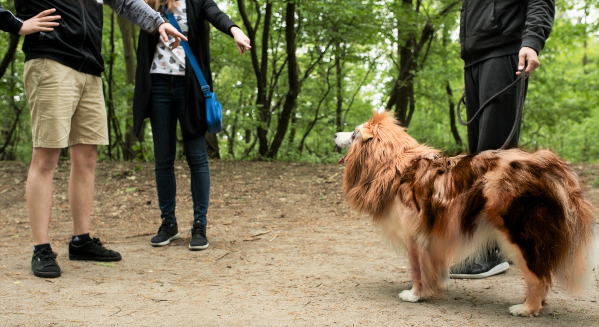 Lion Mane for Dog with Frisbee - Premium Quality, Realistic, Hilarious & Eye Catching Dog Lion Mane - Dog Costume with Ears - Comfortable Lion Wig for Medium and Large Dogs - Perfect Dog Gift by Joy4Pets (Image #6)