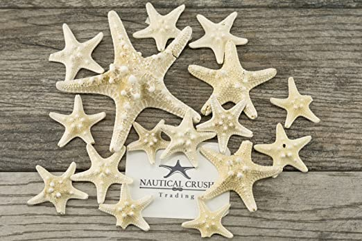 5 White Uniquely Shaped Assortment 9 to 11 Plus Free Nautical eBook by Joseph Rains Finger Starfish Imperfect Starfish for Craft and Decoration