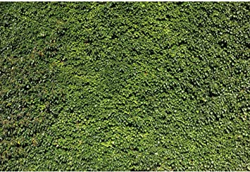 DORCEV 10x8ft Green Ivy Wall Backdrop for Bridal Shower Baby Shower Birthday Party Wedding Photography Backdrop Natural Green Vine Leaves Wall Party Banner Wallpaper Kids Adults Photo Studio Props