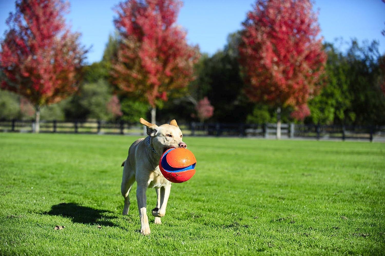 pet supplies pet toy balls chuckit large kick fetch ball