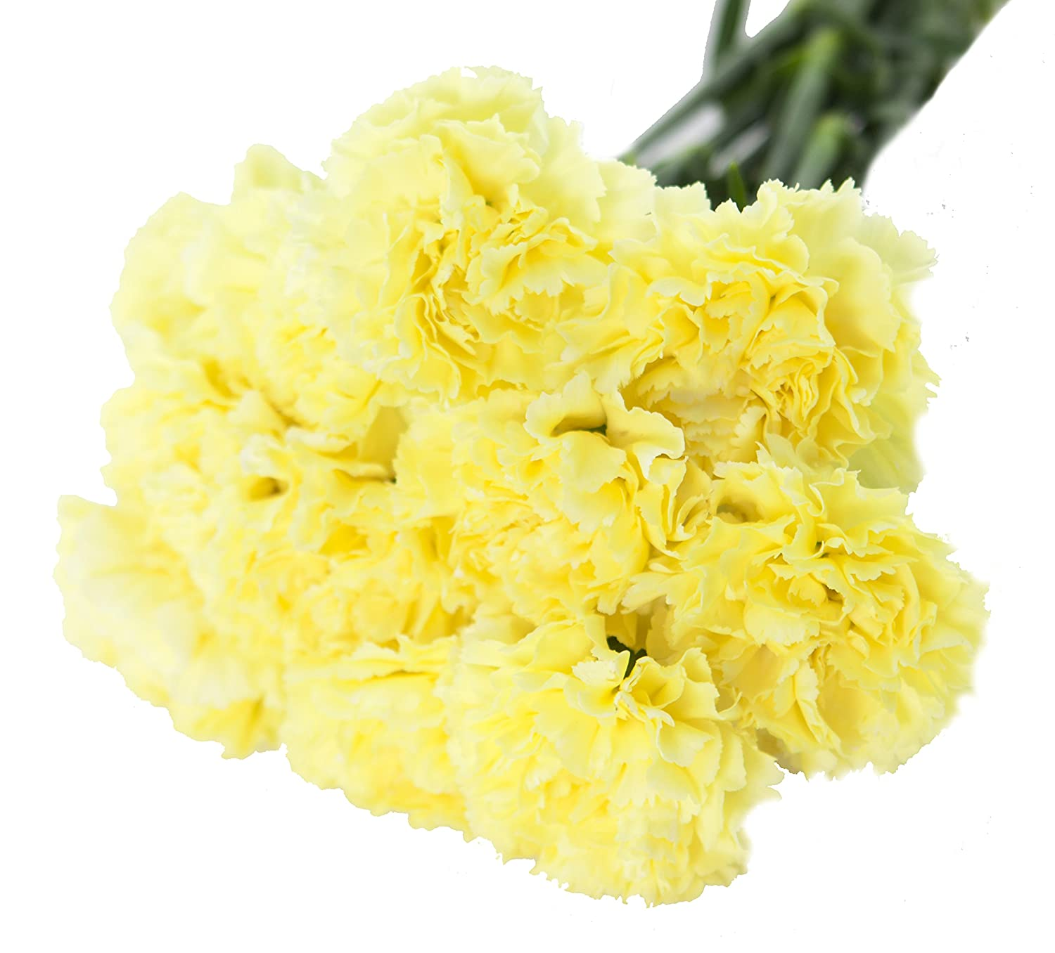 Amazon Yellow Carnation Bouquet 12 Stems With Vase