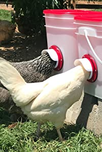 Chicken Feeder-Holds 20 Pounds-Pellets-Crumbles-Grain in Bucket - for 21st Century Chicken Owners - Inside or Outside of Coop - Use with Nipple Waterer (2 Feed Ports - Center (4-6 Hens))