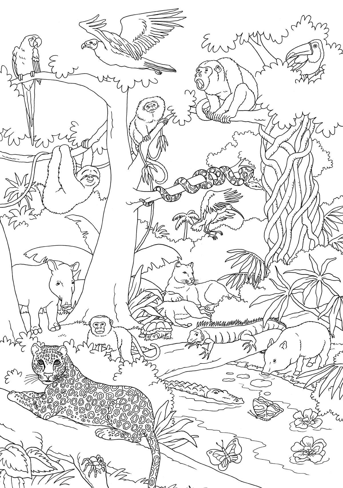 Dschungel Wieso? Weshalb? Warum? Malen, spielen und rätseln: Amazon ...