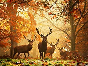 Jungobiu 5D Diamond Painting Kits Deer Forest, DIY Diamond Art Animal Kits Paint with Diamonds Full Round Drill Crystal Rhinestone Embroidery Used for Home Office Wall Decoration 12x16Inch (30x40cm)