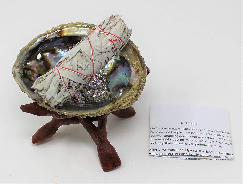 Abalone Shell, 6