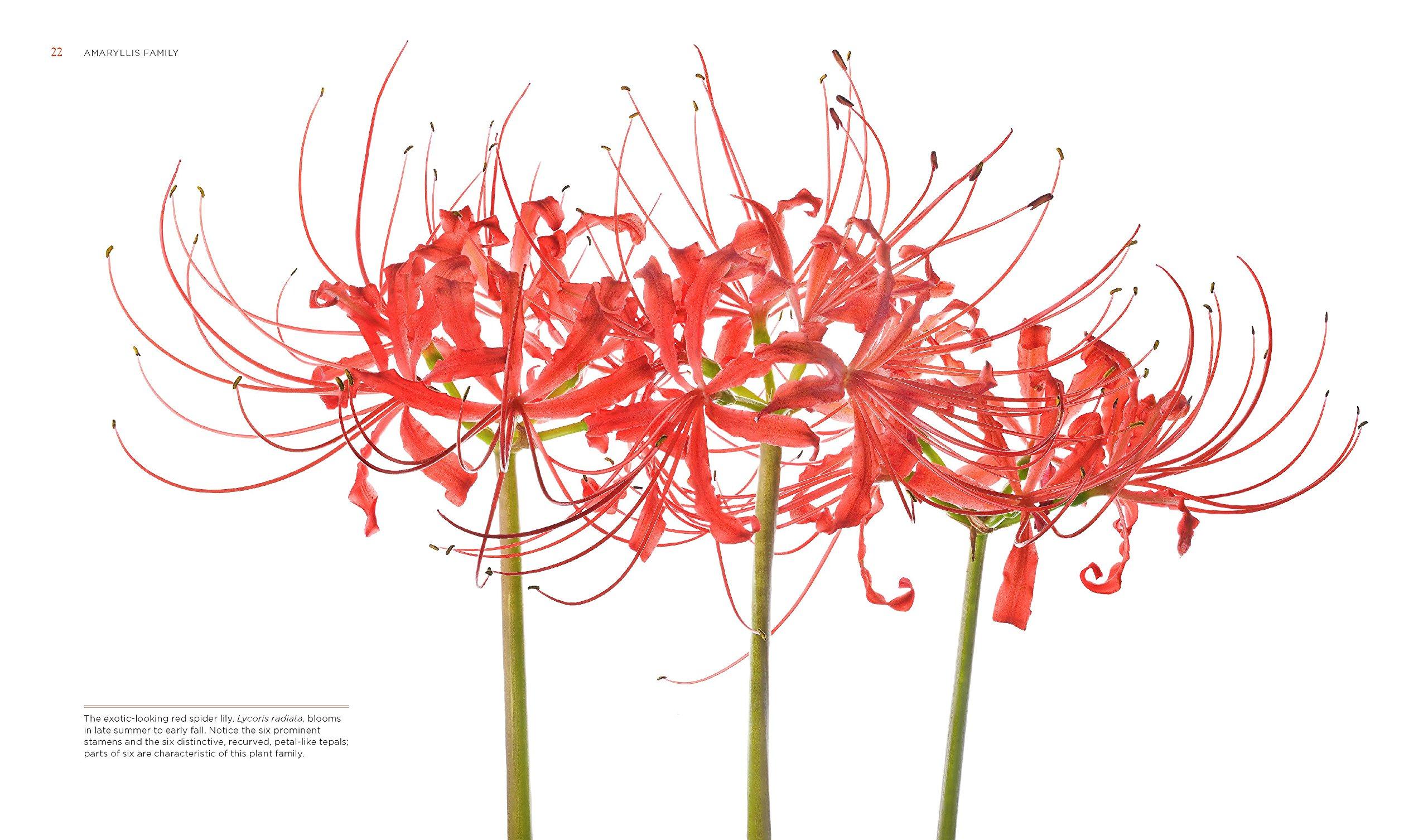 Amazon seeing flowers discover the hidden life of flowers amazon seeing flowers discover the hidden life of flowers seeing series 9781604694222 teri dunn chace robert llewellyn books izmirmasajfo