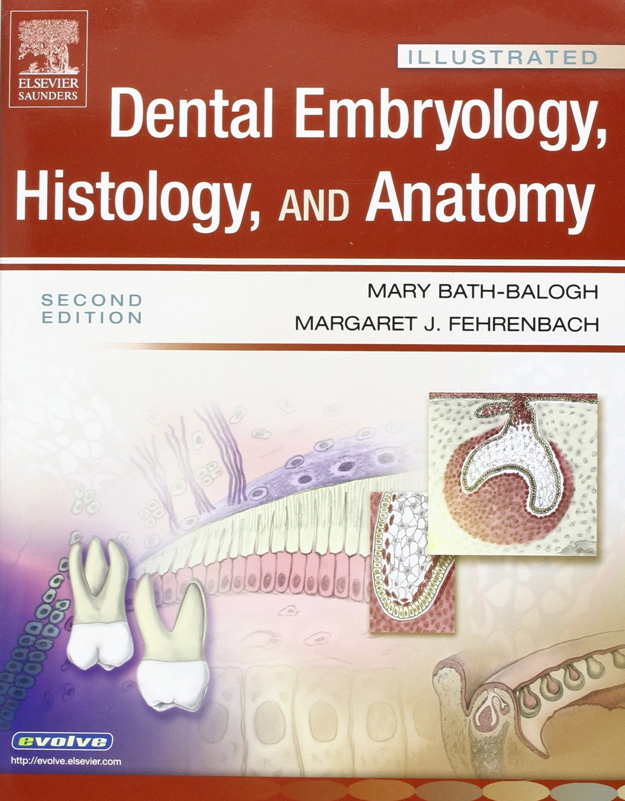 Buy Illustrated Dental Embryology, Histology, and Anatomy 2e and ...