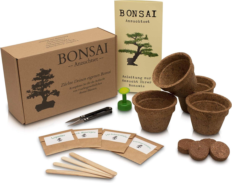 Anista - Set de cultivo para bonsái (4 variedades de semillas de bonsái en nuestro juego de planta)