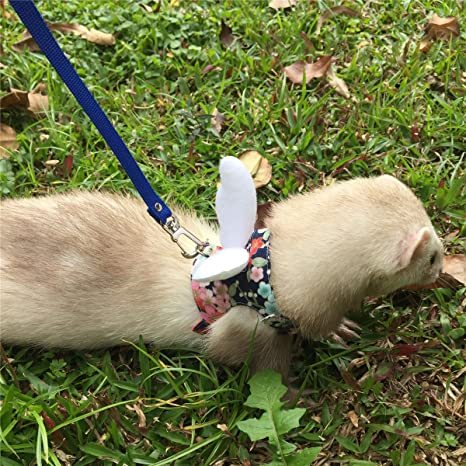 Brutal harness and leash for ferret.