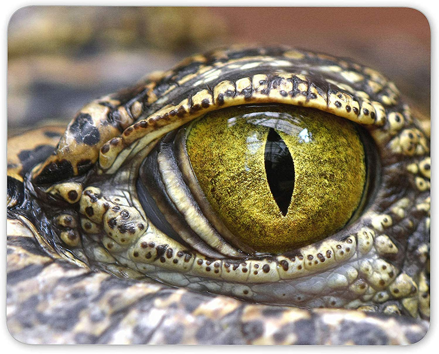 J5E7JYTE Crocodile Alligator Eye Mouse Mat Pad - Aquatic Reptile ...