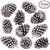 "Supla 10 PCS Natural Pinecones Medium Frosted Pine cones Ornaments Real Preserved Pine Cones - Dried -3""- 4"" TALL for Home Decor Christmas Winter Xmas"