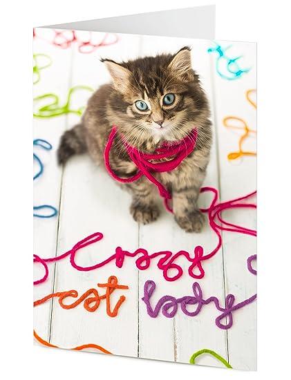 señora loca del gato si gatos charla podría, texto lana, cumpleaños,