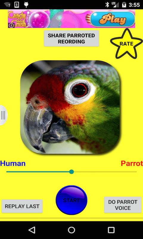 Talking bird