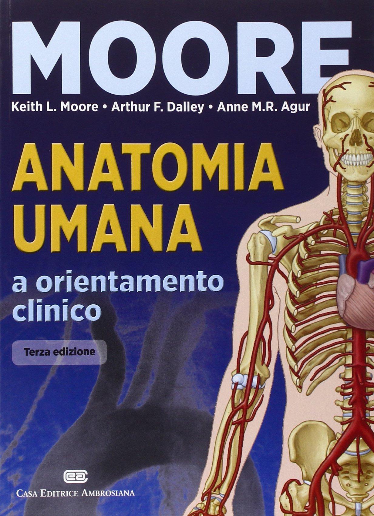 Tolle Keith L Moore Anatomy Zeitgenössisch - Physiologie Von ...