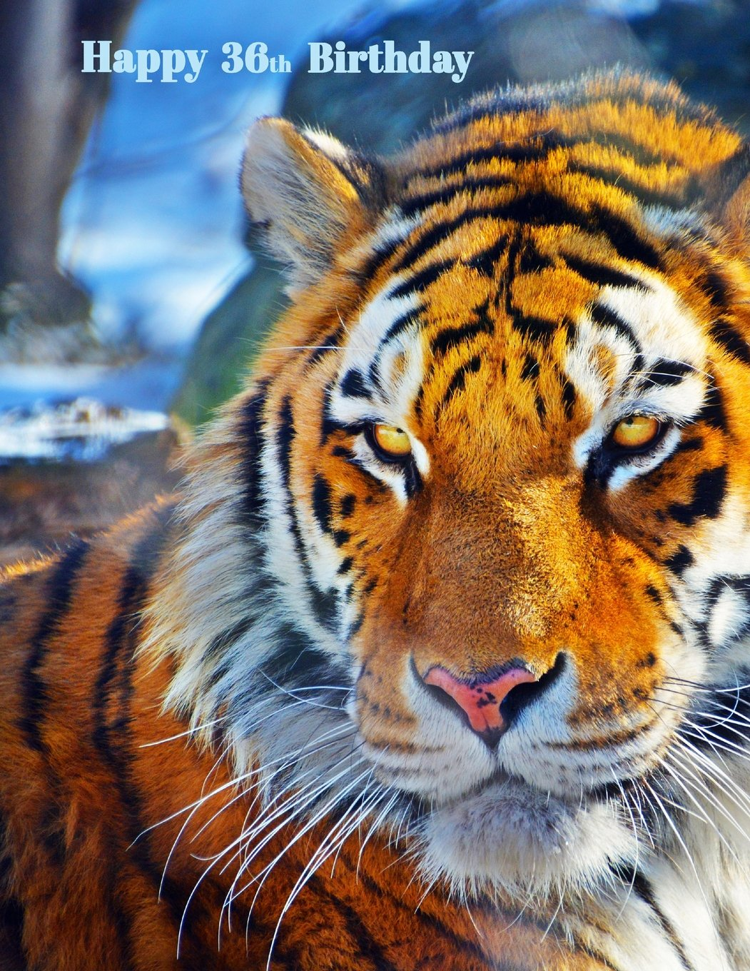 """Download Happy 36th Birthday: Notebook, Journal, Diary, 105 Lined Pages, Birthday Gifts for 36 Year Old Tiger Lovers, Animal Lovers, Women or Men, Sister or ... Friend, Co-Worker, Book Size 8 1/2"""" x 11"""" pdf epub"""
