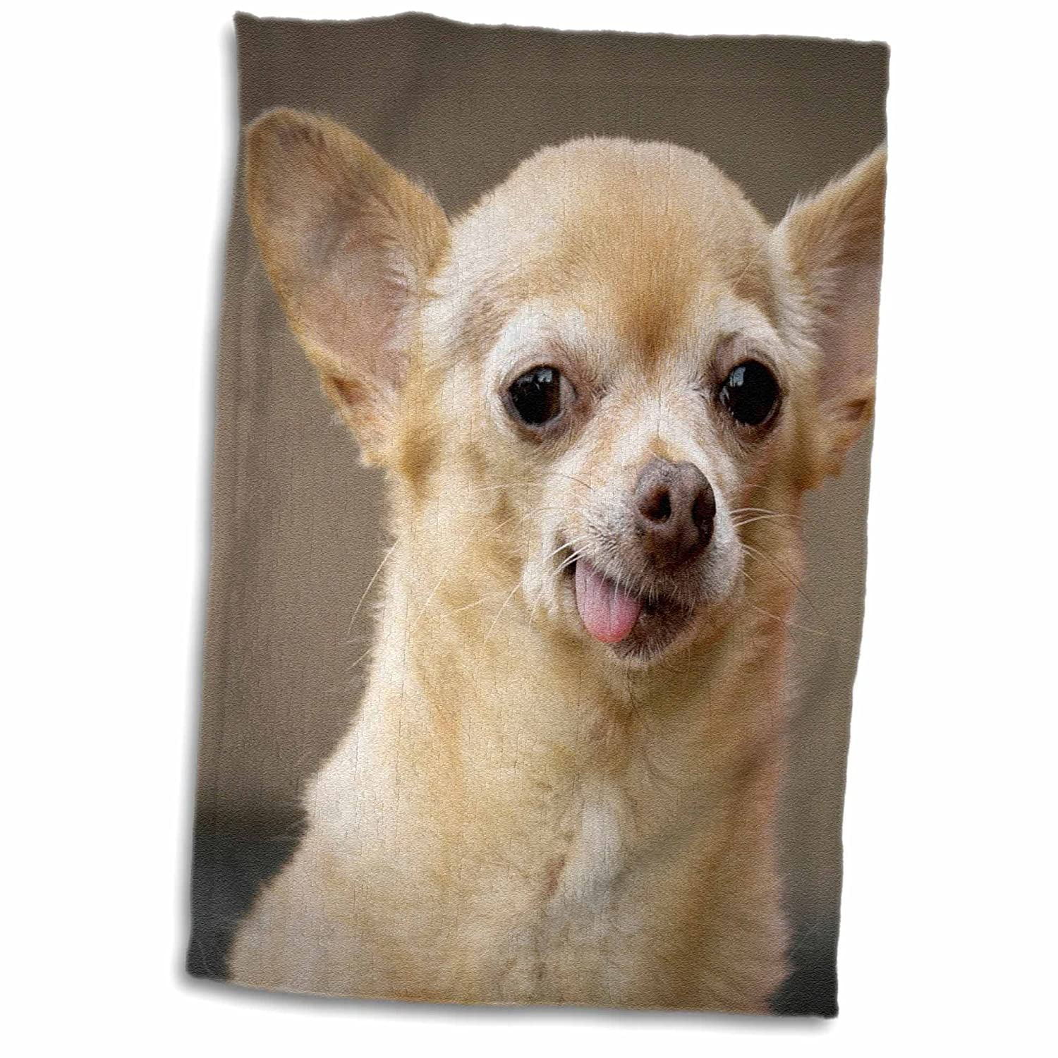 3D Rose Toothless Chihuahua Dog-Santa Fe-New Mexico-Us32 Jmr0502-Julien McRoberts Hand/Sports Towel 15 x 22