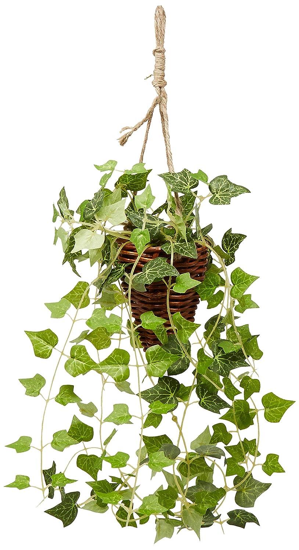 記録機関車冗談で【セラアート鉢(ブラックラウンドポット)】選べる観葉植物 8号鉢