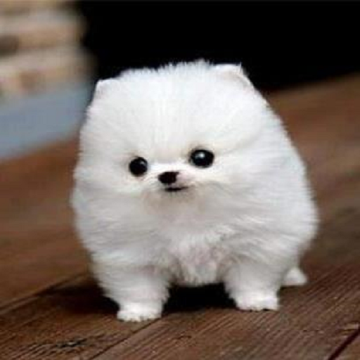 Buy cheap cute puppies collection