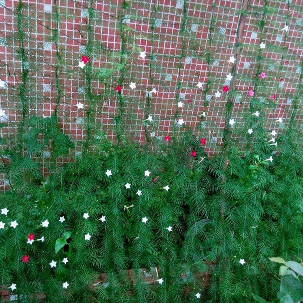 UxradG Nylon Spalier Net für Kletterpflanzen, Rebe und Veggie ...
