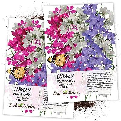Seed Needs, Lobelia Cascade Mixture (Lobelia pendula) Twin Pack of 5, 000 Seeds Each : Flowering Plants : Garden & Outdoor
