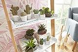 Artificial Plants, 4pc Cactus Set with Cement