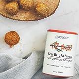 Organic Sea Buckthorn Powder 1.2 oz - Rich in
